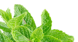 Javo Beverage Company, Mint leaves isolated on a white background